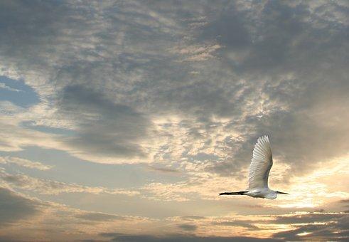Bird, Birds Flying, Wildlife, Animal, Sunset