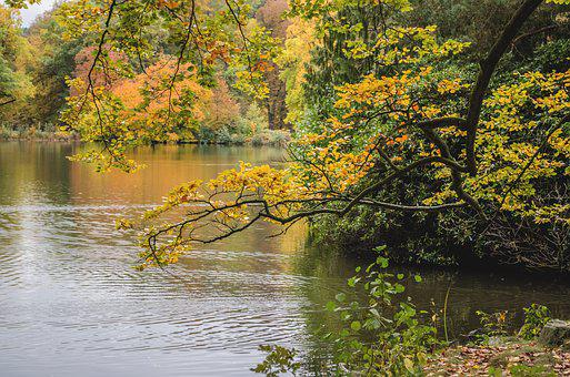 Autumn, Nature, Branch, Lake, Greiz Castle Park