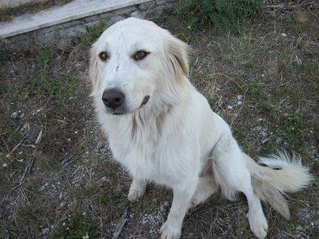 Dog, White, Pet, Animal, Garden, Laying, Mountain