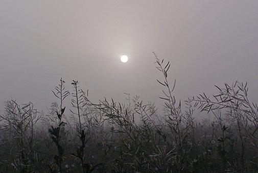 The Fog, Grass, The Sun, Meadow, Dark, Foggy Day, Mood