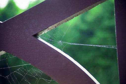 A Spider's Web, Park, Natural, Cobweb