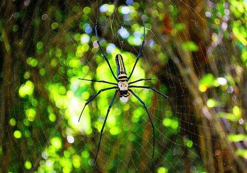 Spider, Spiders Web, Spider Web, Web, Nature, Dew