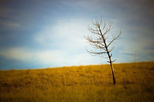 Tree, Plains, Grass, Fall, Nature, Landscape, Sky
