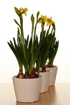Vase, Easter Lilies, Spring, Pan, Flowers, Narcis