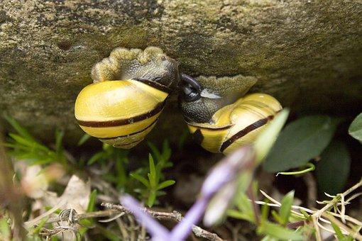 Snails, Pairing, Love, Amphibians, Reproduction