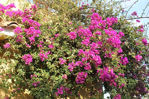 Flowers, Hedge, Flower, Blossom, Bloom, Close, Plant