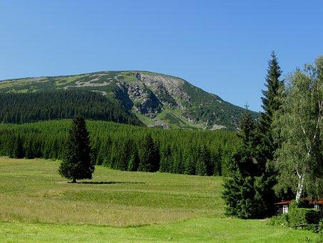 Mountain, Forest, Meadow, Solitude, Landscape