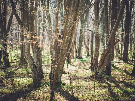 Forest, Trees, Wood, Sun, Park, Nature, Natural, Spring