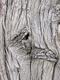 Tree, Bark, Nature, Forest, Trunk, Wood, Park