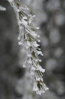 Branch, Fir, Iced, Icy, Hoarfrost, Pine Needles, Winter