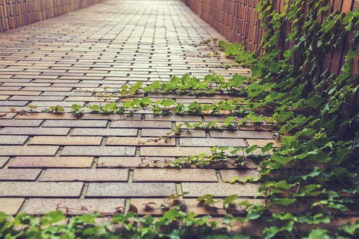 Ivy, Climbing Plant, Creeper, Plant, Leaves, Brickwork