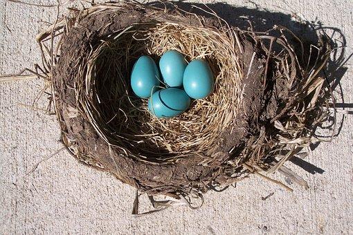 Egg, Nest, Bird, Robin, Birth, Spring, Life, Baby