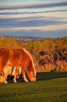 Horse, Wild Horse, Grazing, Countryside, Horses, Animal