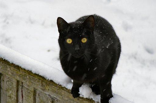 Cat, Black, Kitty, Domestic, Feline, Pet, Kitten