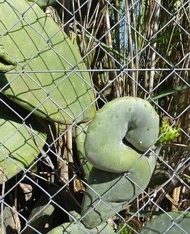 Cactus, Form, Exit, Metal Fence, Deformation