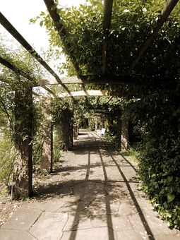 Away, Gang, Plant Tunnel, Walk, Canopy, Shadow