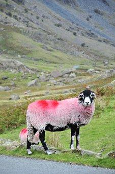 Sheep, Hills, Landscape, Farm, Nature, Grass, Field