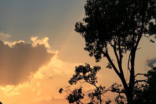 Sunset, Cloud, Edge, Gilt, Glow, Orange, Gold, Tree