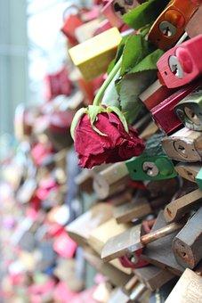 Rose, Flower, Faded, Padlocks, Love Locks, Cologne