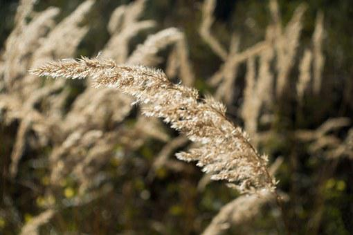 Grass, Forest, Bluegrass, Long Dust Threads, Back Light