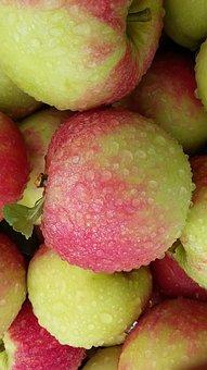 Apple, Elstar Apple, Dew, Fruits, Fruit, Fresh, Harvest