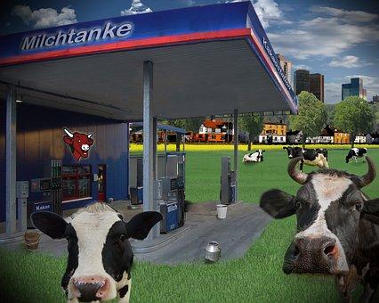 Milk, Petrol Stations, Cows, Humor, Funny, Summer