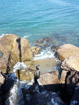 Habor, Santa Barbara, New, Beach, Port, Sea, Stone