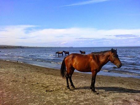 Horse, Sea, Ocean, Wildlife, Water, Animal, Wild