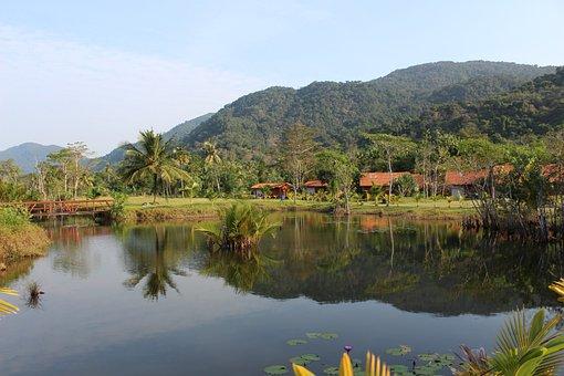 Lake, Rain Forest, Palm Trees, River, Palm, Jungle