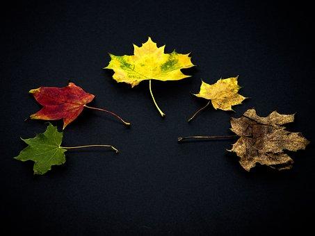 Leaves, Autumn, Leaves In The Autumn, Fall Foliage