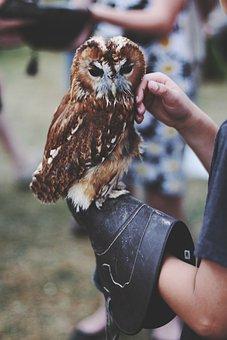 Owl, Animal, Handler, Bird, Nature, Flying, Feathers