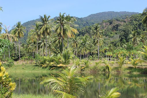 Rain Forest, Palm Trees, River, Thailand, Palm, Jungle