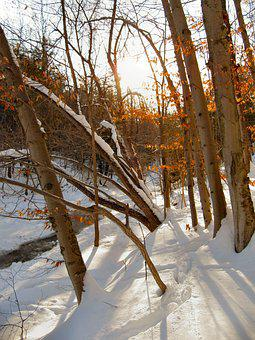 Snow, Late Day, Outdoor, Tree, Winter, Late