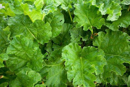 Agriculture, Crop, Food, Fresh, Garden, Green, Growing