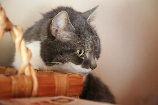 Cat, Basket, Look, Deep Thoughts, Oven, Gray, White