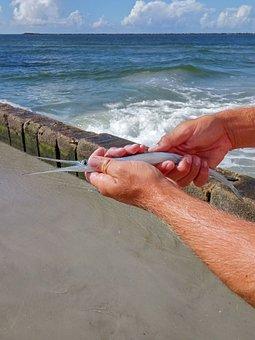 Garfish, Fish, Fishing, Sea, Gar