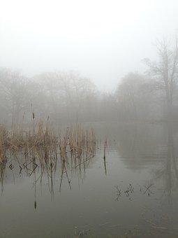 Mist, Fog, Nature, Lake, Landscape, Forest, Light