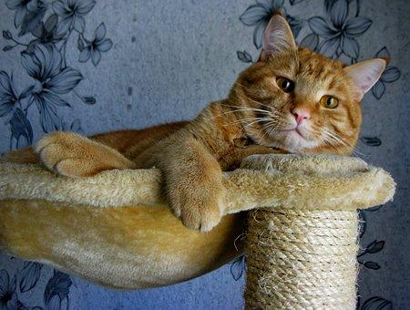 Cat, Red, Cute, Domestic, Pet, Animal, Cute Cat, Feline