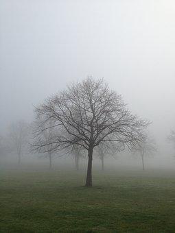 Mist, Fog, Tree, Landscape, Nature, Forest, Light