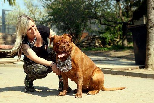 Dogue De Bordeaux, Barbara De Bordeaux, Bordo, Dog