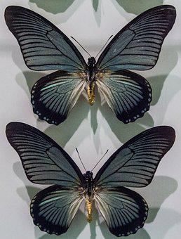Butterflies, Butterfly, Nature, Collection, Museum