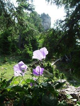 Flower, Bellflower, Meadow, Pine, Forest, Nature
