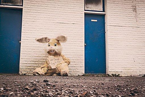 Stuffed Animal, Bunny, Homeless, Unsheltered, Unhoused