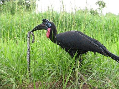 Bird, Predator, Africa, Safari, Wildlife, Animal