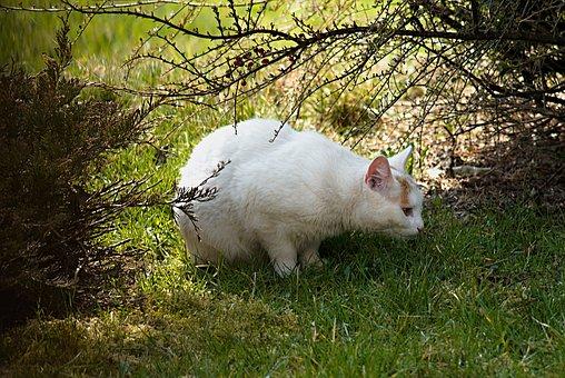 Cat, On The Prowl, White, On The Hunt, Garden, Sun