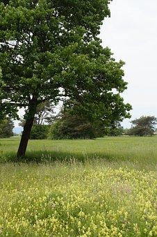 Meadow, Wild Flowers, Wild Flower Meadow, Wild, Grass