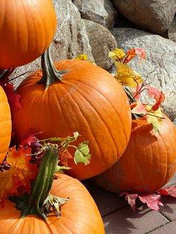 Pumpkin, Autumn, Fall, Fruit, Arrangement, Colorful