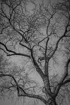 Tree, Bare, Branches, Nature, Winter, Autumn, Seasonal