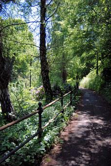 Pathway, Woodland, Forest, Landscape, Environment
