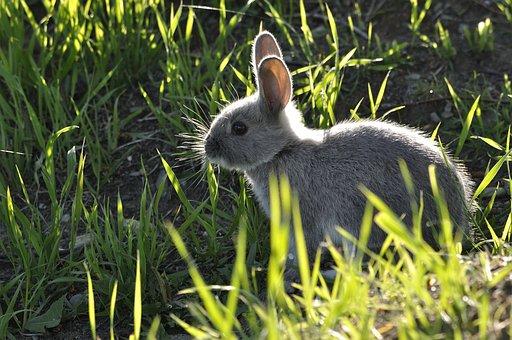 Bunny, Animal, Nature, Rabbit, Cute Animals, Little